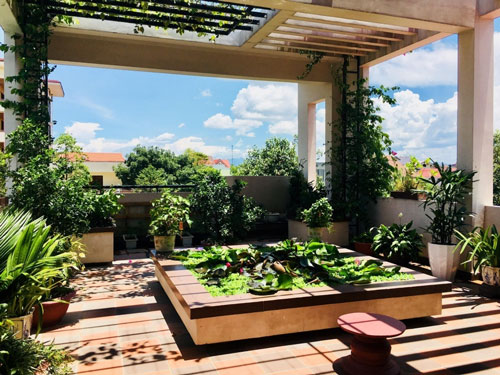 Sân vườn cùng cây xanh hòa mình vào ánh nắng