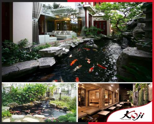 Vệ sinh hồ cá Koi dễ dàng tại nhà