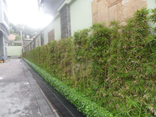 8 mẫu tường xanh sân vườn