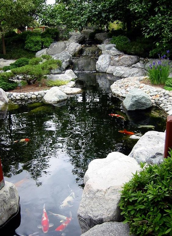 tiểu cảnh cũng là yếu tổ giúp hồ cá Koi đẹp hơn