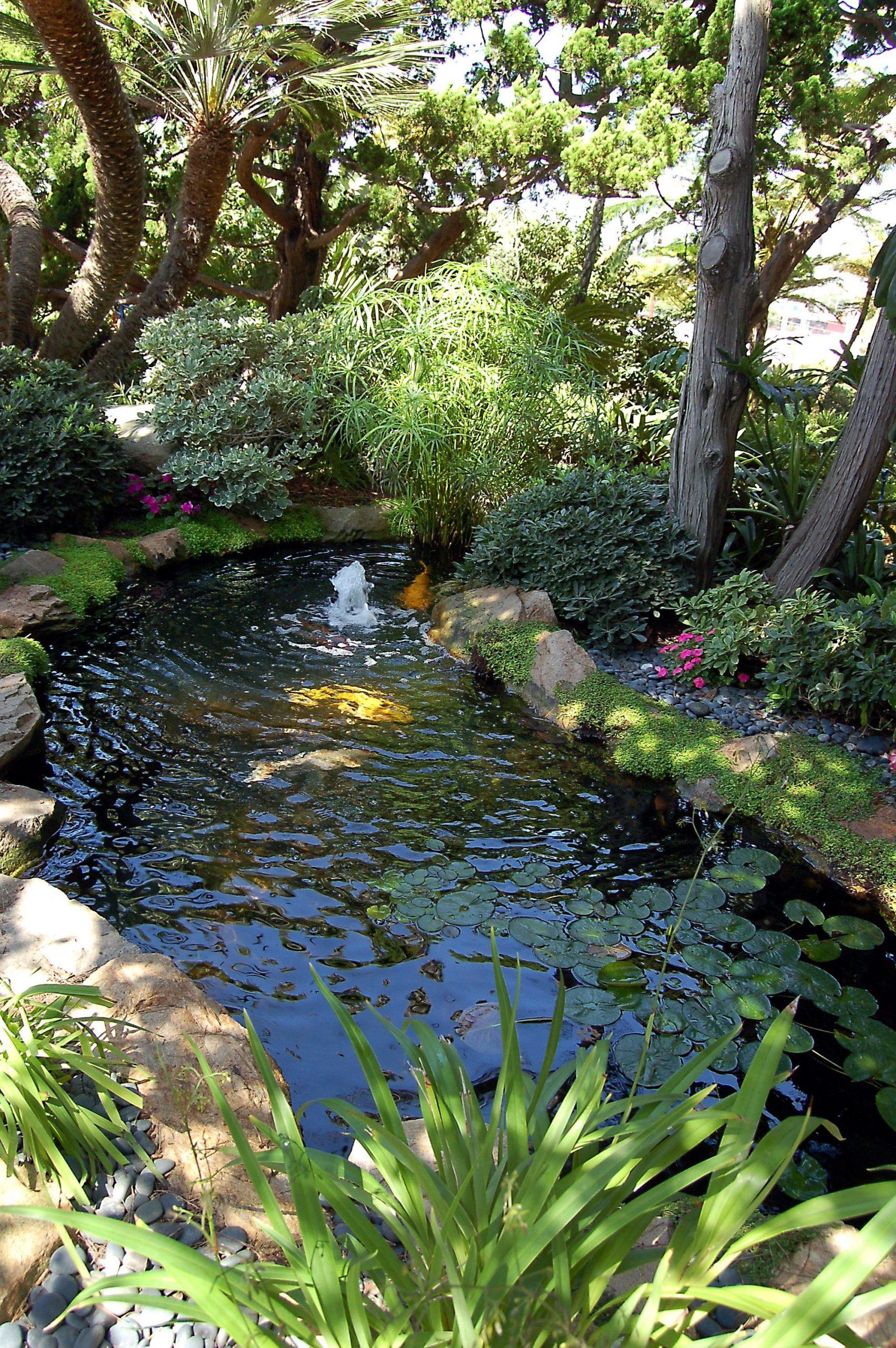 Hồ Koi trồng nhiều cây kết hợp phong cách Á - Âu
