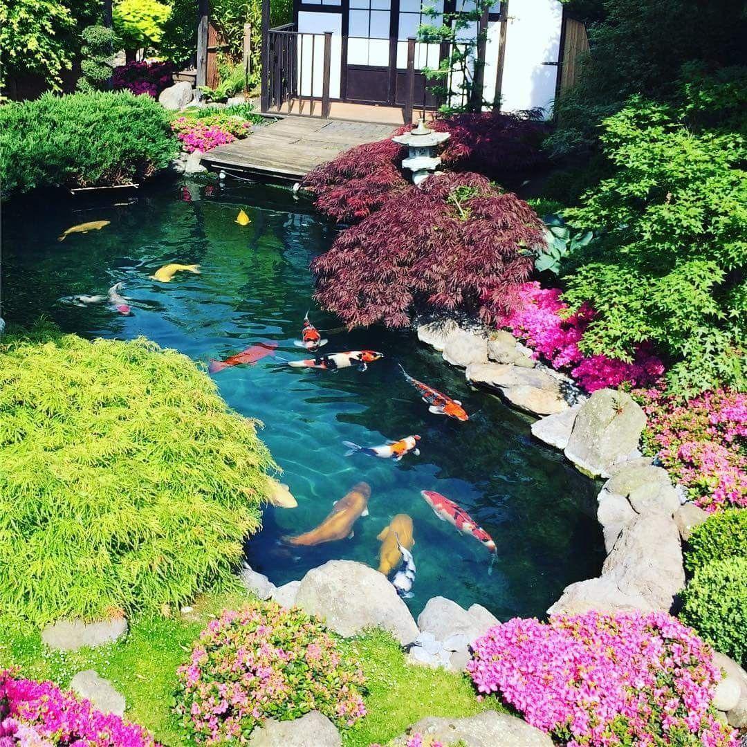 hồ cá kết hợp với những loại cây, hoa màu sắc tươi sáng sinh động