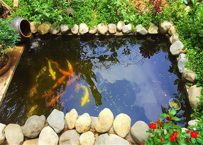 Hồ koi mini kết hợp cây và tiểu cảnh