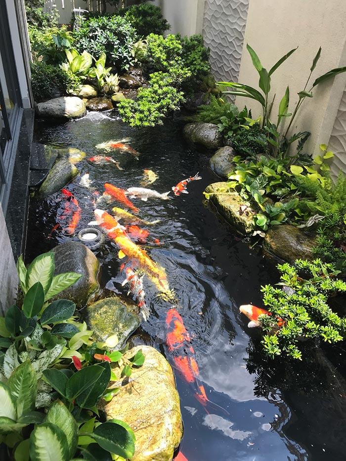 Hồ cá bên hông nhà tận dụng tối đa không gian