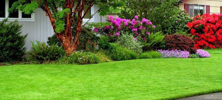 Lựa chọn cỏ sân vườn